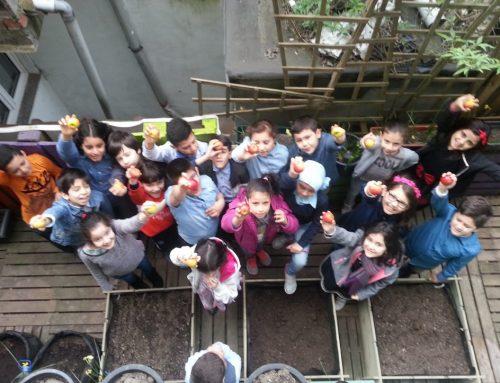 Les cycles vertueux des fruits et des légumes – Ecole La Vertu