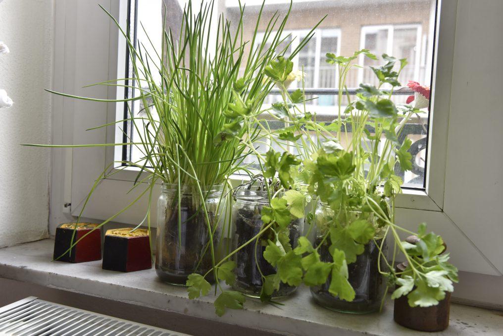 21 03 formation potager les plantes aromatiques. Black Bedroom Furniture Sets. Home Design Ideas